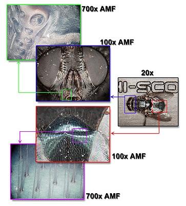 Hirox mikroszkóp alkalmazása biológiai vizsgálatokhoz